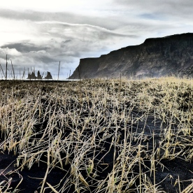 Beach Grasses at Vik